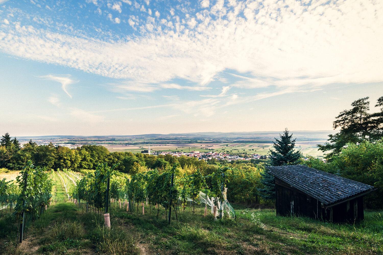 Ried Katterstein am Leithaberg - Weingut Kirchknopf